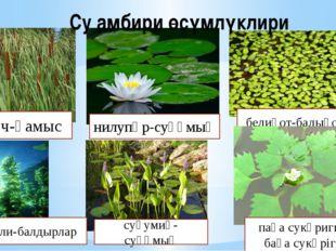 Су амбири өсүмлүклири қомуч-қамыс водоросли-балдырлар нилупәр-суқұмық белиқот