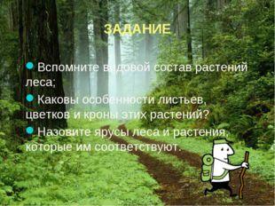 ЗАДАНИЕ Вспомните видовой состав растений леса; Каковы особенности листьев,