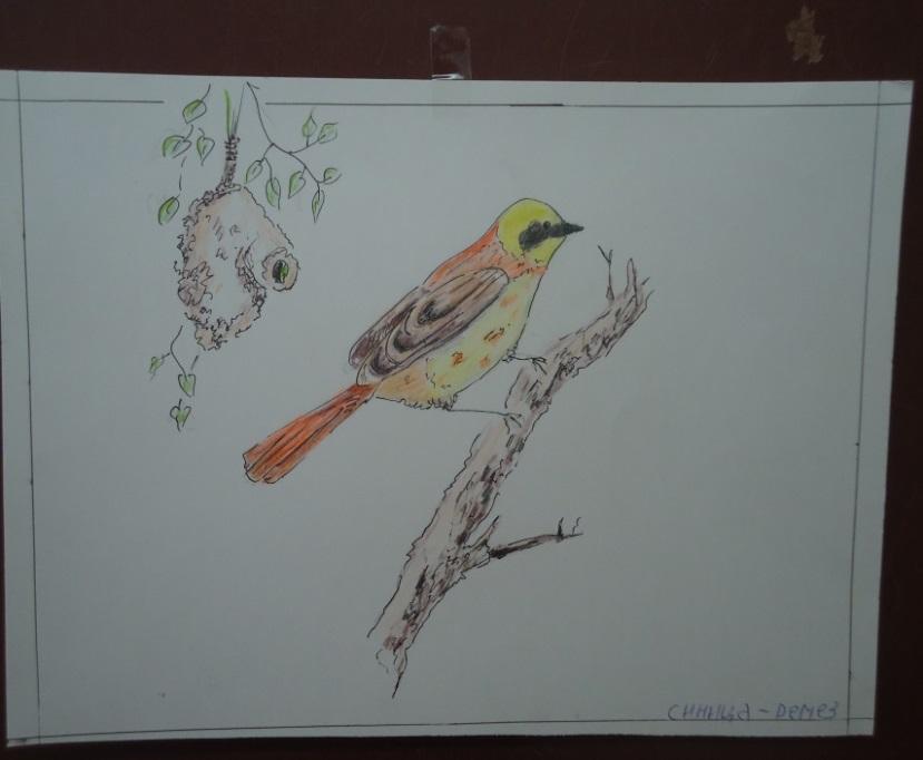 F:\для птичек\DSC02011.JPG