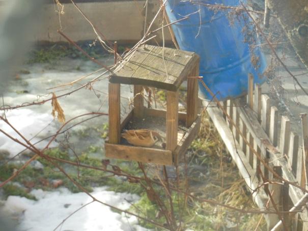 F:\Акция покормите птиц\Саша Дмитриев\фото\DSCN5368.jpg