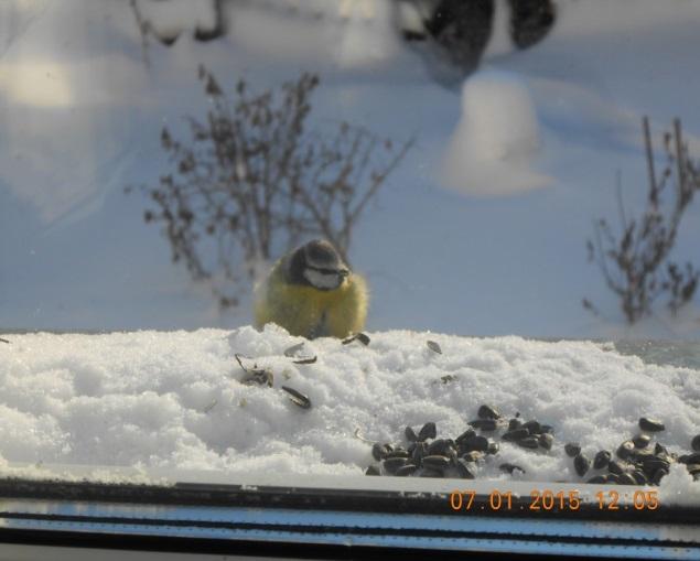 F:\Акция покормите птиц\фото птицы\Рожкова.jpg