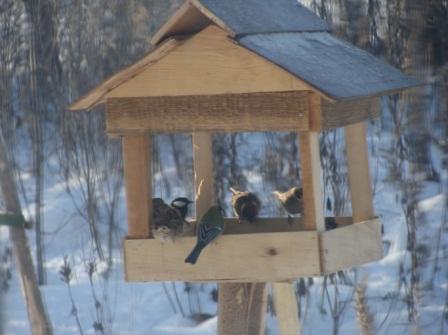 F:\Акция покормите птиц\фото птицы\Бутяева4.jpg