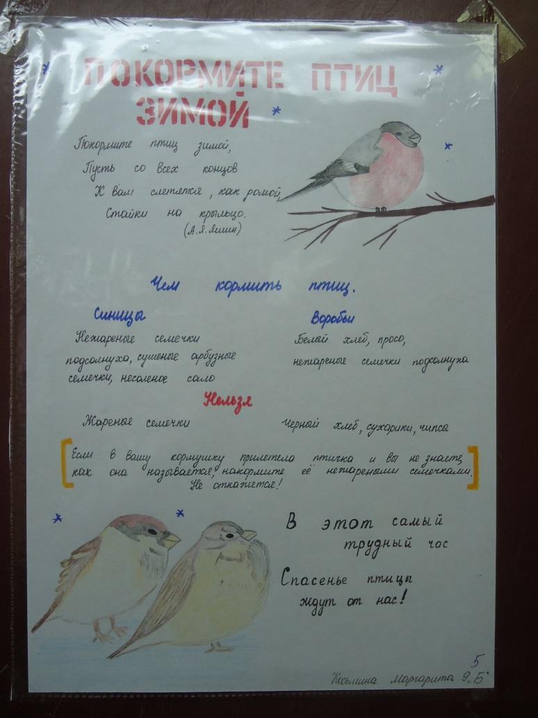 F:\Акция покормите птиц\фотки птичек\DSC01952.JPG