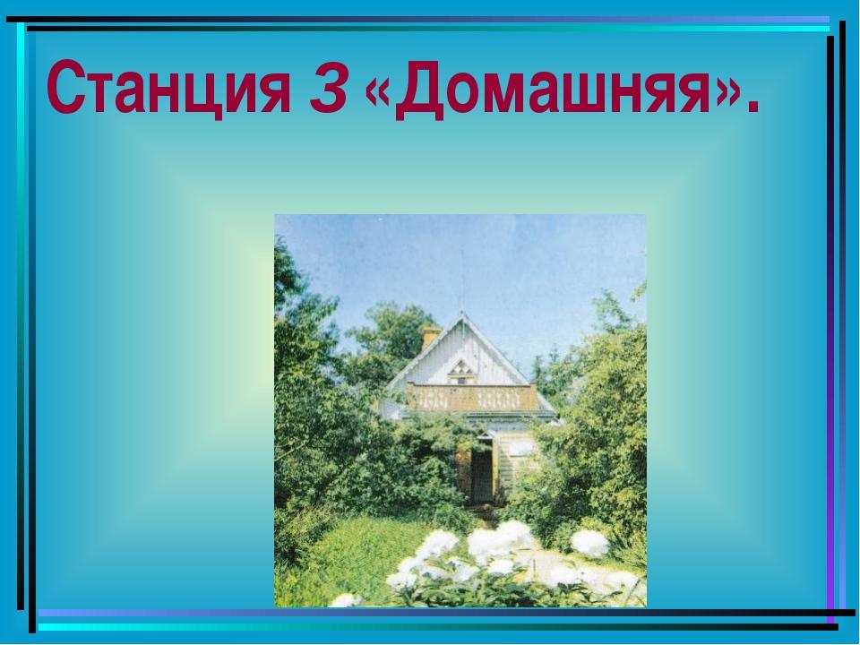Станция 3 «Домашняя».