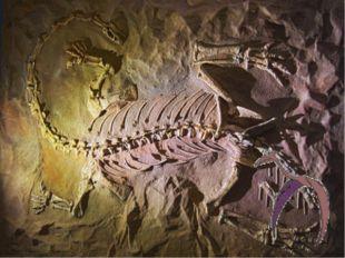 8. Музей Iziko, Кейптаун, ЮАР ЮАР не может похвастаться скелетами Тираннозавр