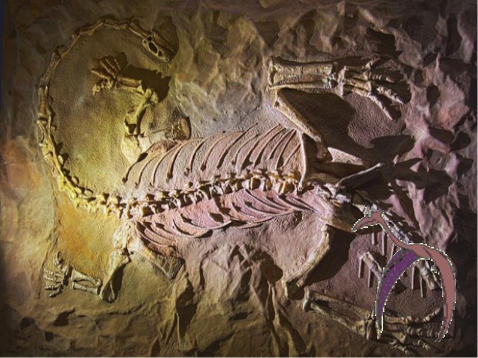 8. Музей Iziko, Кейптаун, ЮАР ЮАР не может похвастаться скелетами Тираннозавр...