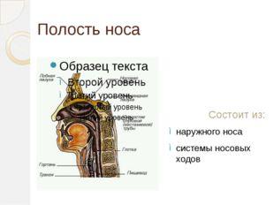 Полость носа Состоит из: наружного носа системы носовых ходов