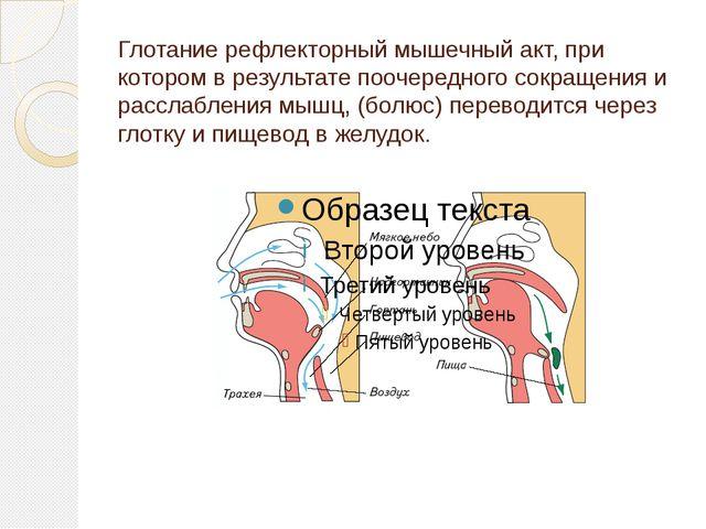 Глотание рефлекторный мышечный акт, при котором в результате поочередного сок...