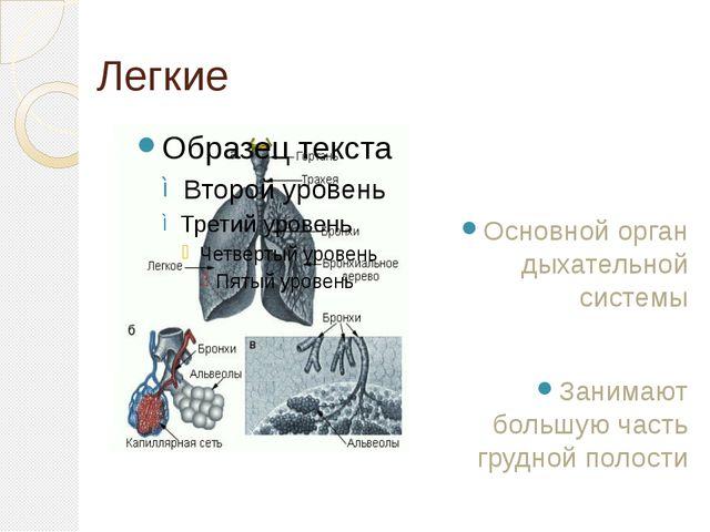 Легкие Основной орган дыхательной системы Занимают большую часть грудной поло...