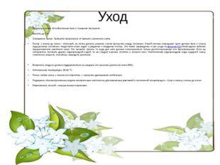 Уход Родина растения: Юго-Восточная Азия и Северная Австралия. Высота: до 3 м