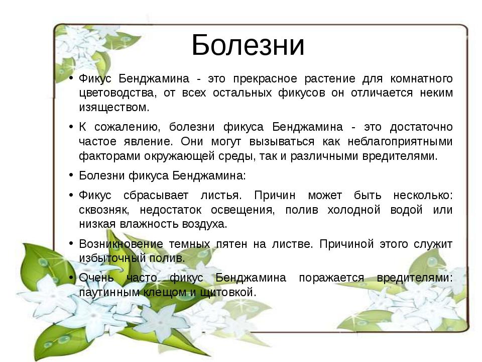 Болезни Фикус Бенджамина - это прекрасное растение для комнатного цветоводств...