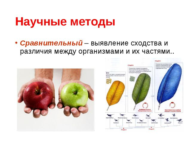 Научные методы Сравнительный – выявление сходства и различия между организмам...