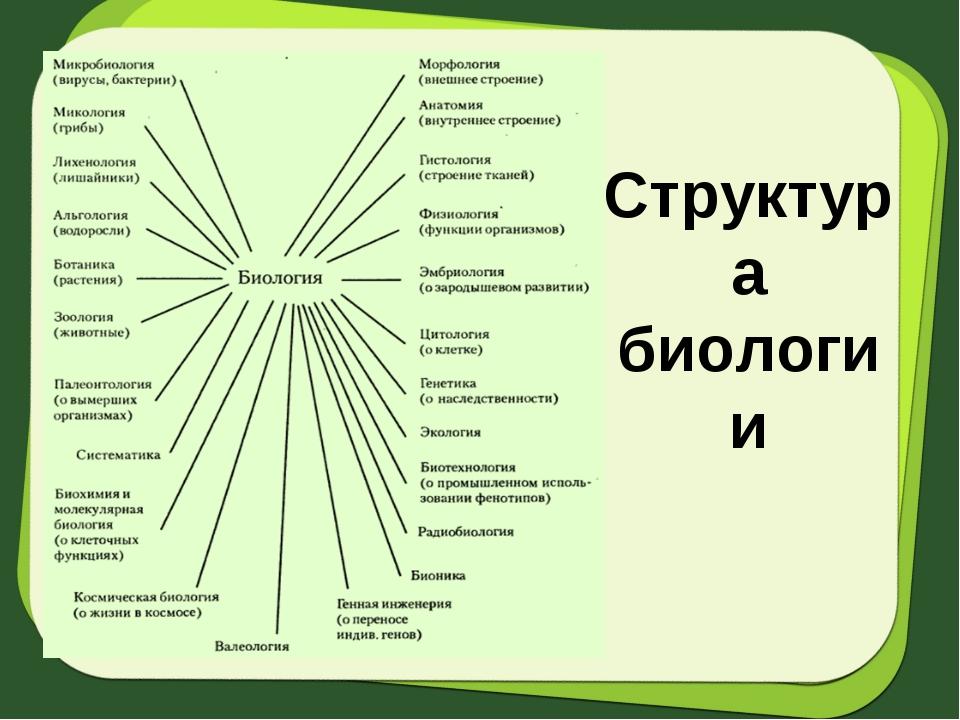 Структура биологии