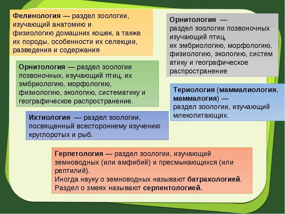 Фелинология— разделзоологии, изучающий анатомию и физиологиюдомашних кошек...