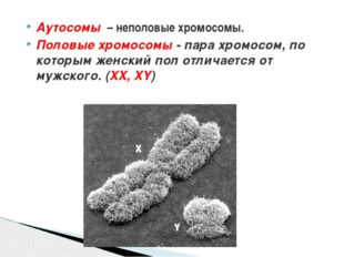 Аутосомы – неполовые хромосомы. Половые хромосомы - пара хромосом, по которы