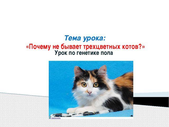 Тема урока: «Почему не бывает трехцветных котов?» Урок по генетике пола
