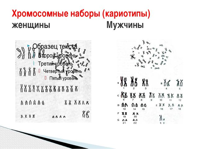 Хромосомные наборы (кариотипы) женщины Мужчины