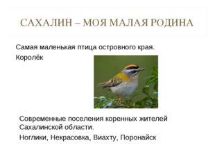 САХАЛИН – МОЯ МАЛАЯ РОДИНА Самая маленькая птица островного края. Королёк Сов