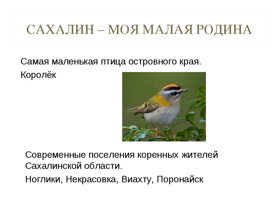 САХАЛИН – МОЯ МАЛАЯ РОДИНА Самая маленькая птица островного края. Королёк Сов...