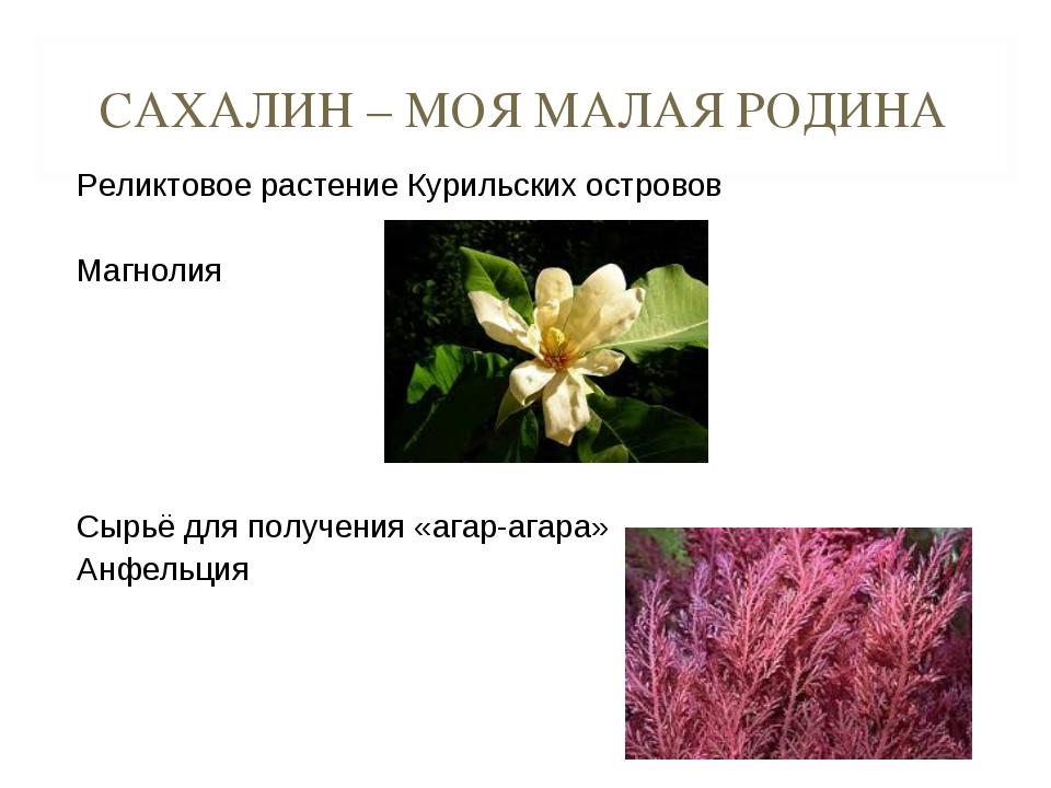 САХАЛИН – МОЯ МАЛАЯ РОДИНА Реликтовое растение Курильских островов Магнолия С...