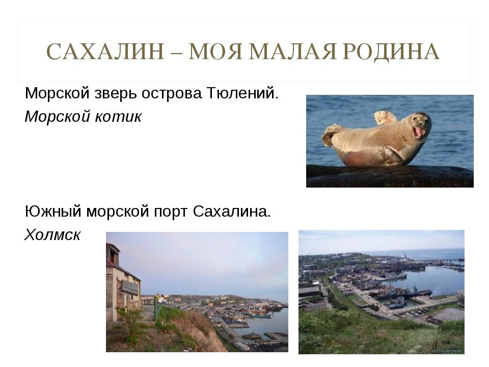 САХАЛИН – МОЯ МАЛАЯ РОДИНА Морской зверь острова Тюлений. Морской котик Южны...