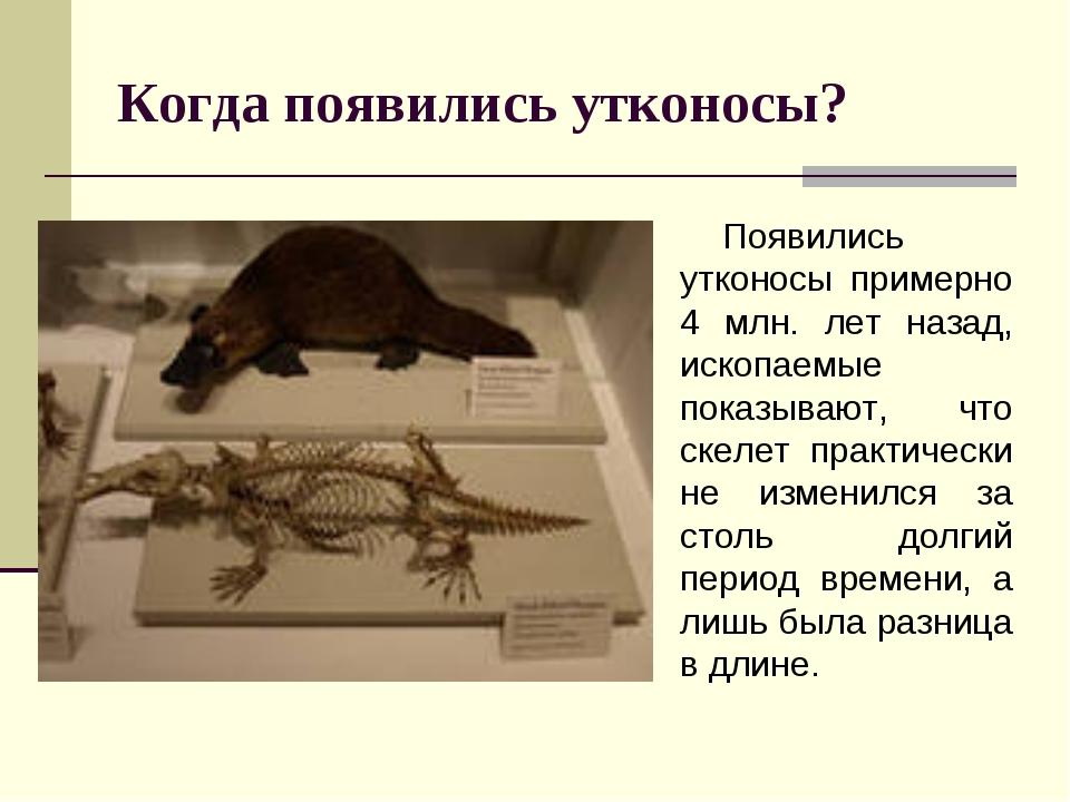 Когда появились утконосы? Появились утконосы примерно 4 млн. лет назад, ископ...