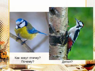 Как зовут птичку? Почему? Дятел?