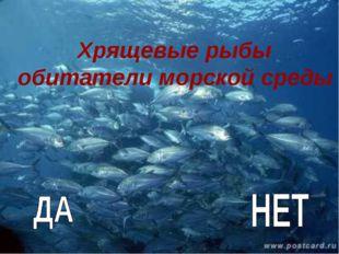 Хрящевые рыбы обитатели морской среды