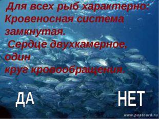 Для всех рыб характерно: Кровеносная система замкнутая. Сердце двухкамерное,