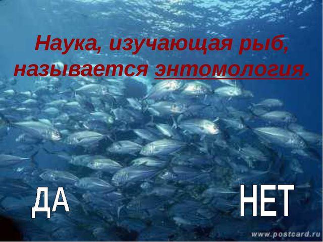 Наука, изучающая рыб, называется энтомология.
