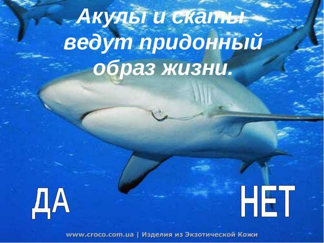 Акулы и скаты ведут придонный образ жизни.