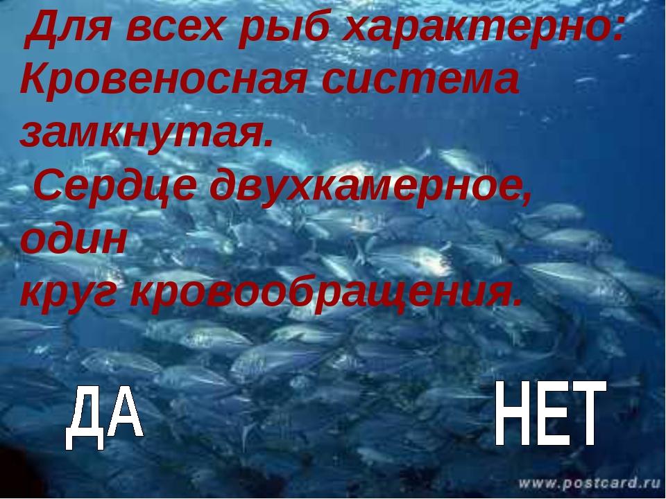 Для всех рыб характерно: Кровеносная система замкнутая. Сердце двухкамерное,...