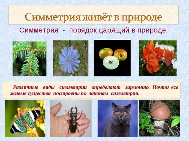 Различные виды симметрии определяют гармонию. Почти все живые существа постр...