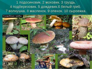 1 подосиновик. 2 моховик. 3 груздь. 4 подберезовик. 5 дождевик.6 белый гриб.