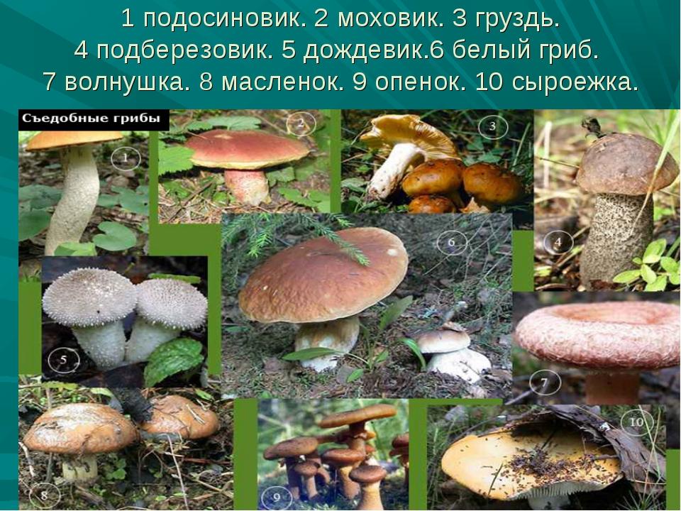 1 подосиновик. 2 моховик. 3 груздь. 4 подберезовик. 5 дождевик.6 белый гриб....