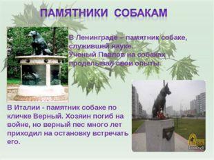 В Ленинграде – памятник собаке, служившей науке. Ученый Павлов на собаках про