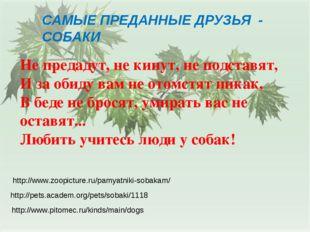 САМЫЕ ПРЕДАННЫЕ ДРУЗЬЯ - СОБАКИ http://www.pitomec.ru/kinds/main/dogs http://