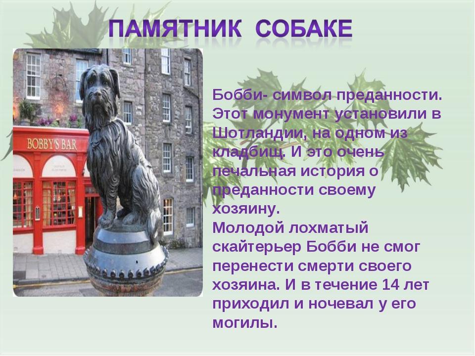 Бобби- символ преданности. Этот монумент установили в Шотландии, на одном из...