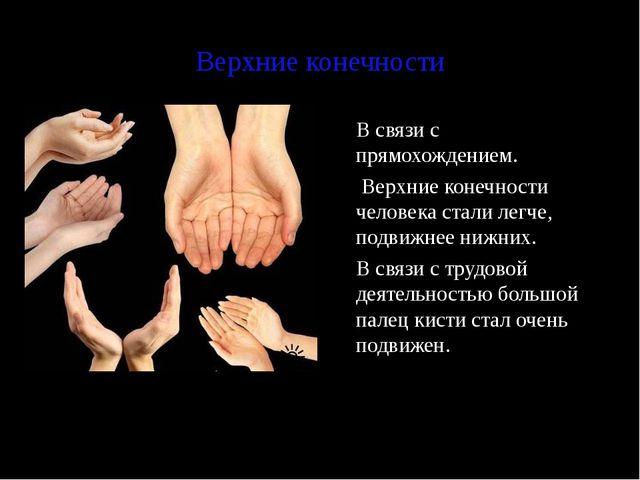 Верхние конечности В связи с прямохождением.  Верхние конечности человека с...