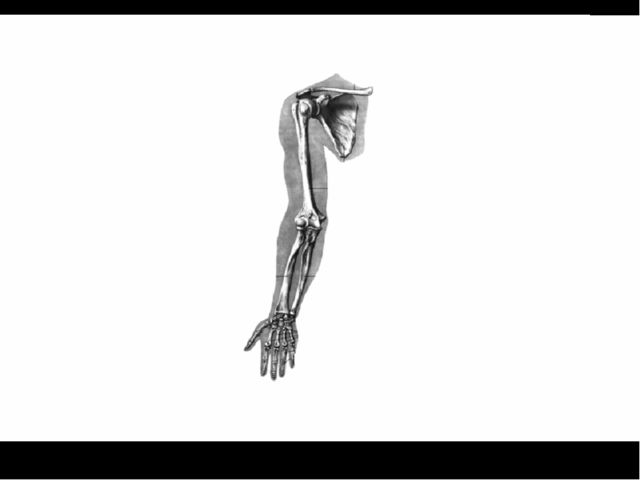 Большой палец руки противопоставлен другим.