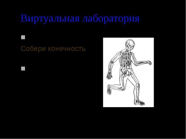 Виртуальная лаборатория Задание 1 Собери конечность Задание 2 Собери скелет