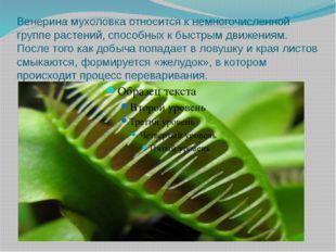 Венерина мухоловка относится к немногочисленной группе растений, способных к