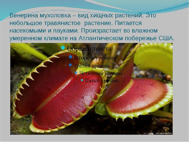 Венерина мухоловка – вид хищных растений. Это небольшое травянистое растение....