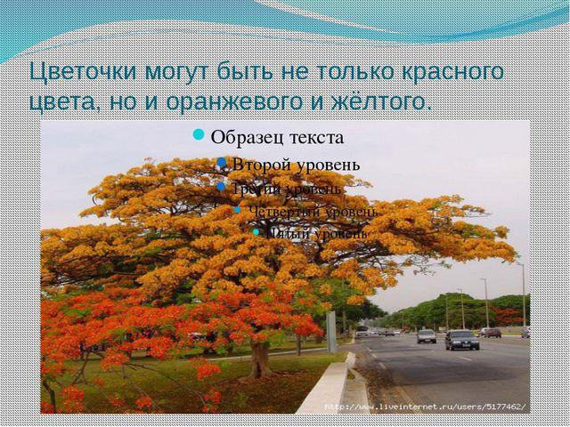 Цветочки могут быть не только красного цвета, но и оранжевого и жёлтого.