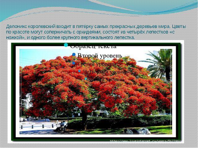 Делоникс королевский входит в пятёрку самых прекрасных деревьев мира. Цветы п...