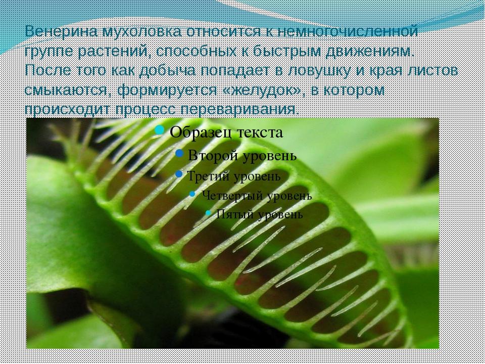 Венерина мухоловка относится к немногочисленной группе растений, способных к...