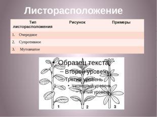 Листорасположение Тип листорасположения Рисунок Примеры Очередное 2. Супротив