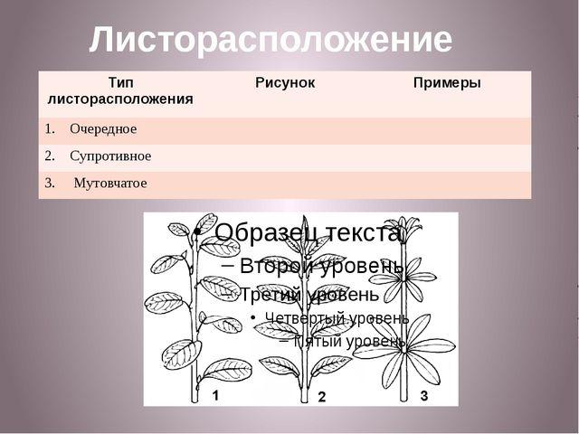 Листорасположение Тип листорасположения Рисунок Примеры Очередное 2. Супротив...