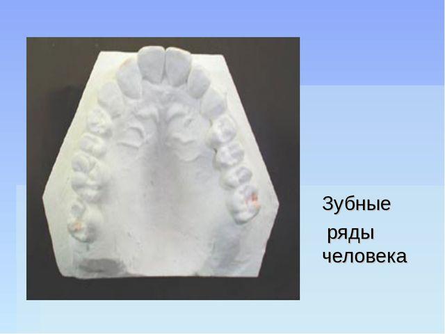 Зубные ряды человека