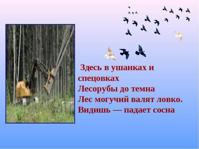 Здесь в ушанках и спецовках Лесорубы до темна Лес могучий валят ловко. Видиш...